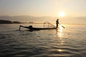 Farmed fish consumption