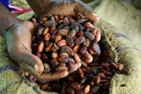 cocoa-shortage